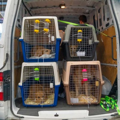 Doggos-ready-for-transport