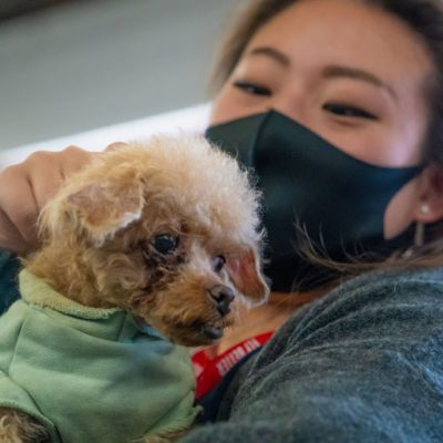 Volunteer-with-poodle